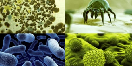 Healthy Home, Dust mites, mold, bacteria potentially in ductwork, NY