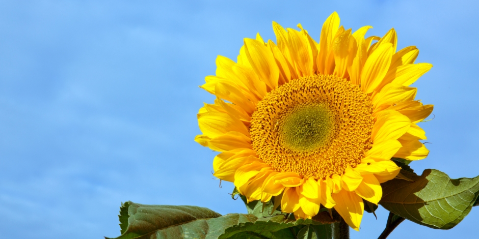 Healthy Home Energy and Consulting, Sunflower, NY