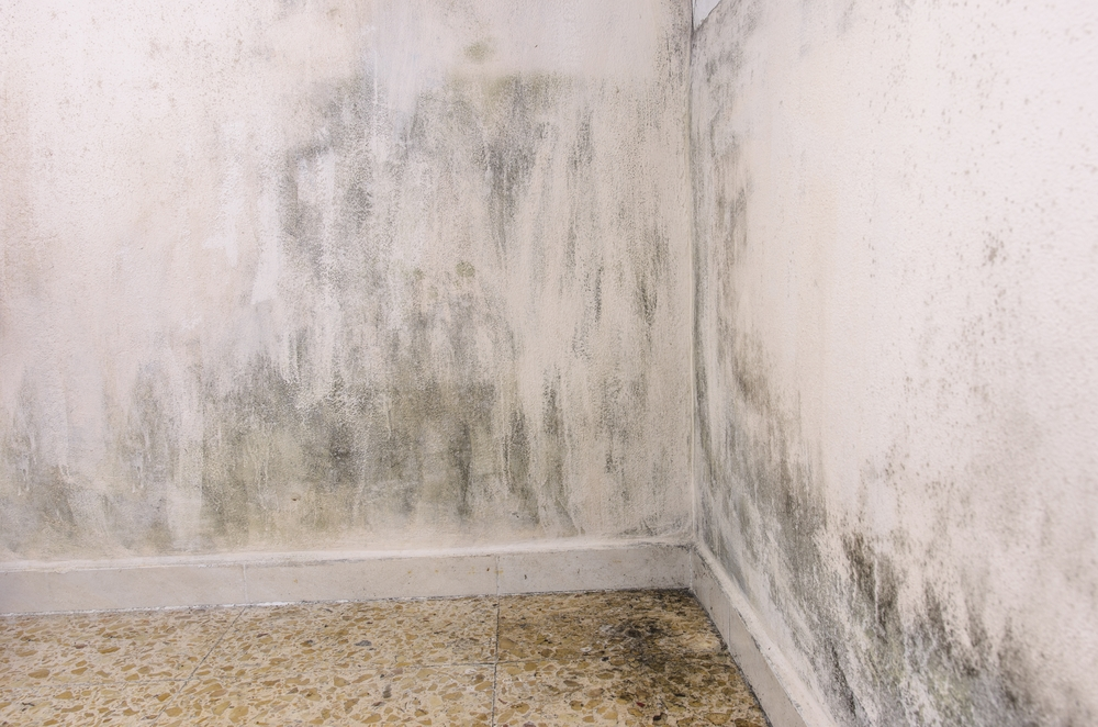 moisture and mold on a wall inside home