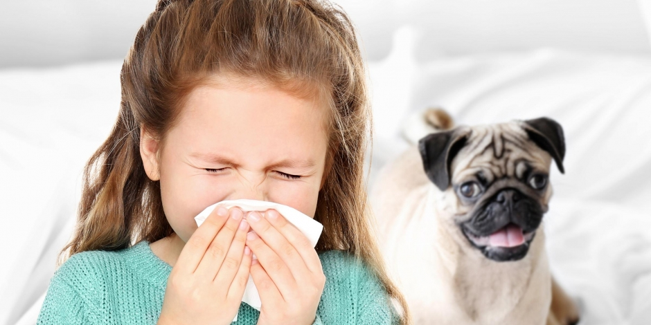 young girl sneezing next to dog indoors